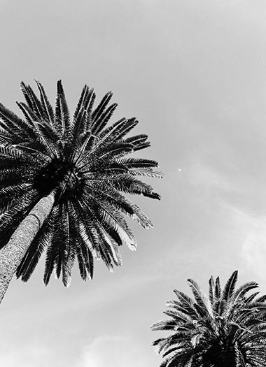 Palm Trees 1