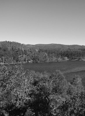 Flagstaff Landscape Final